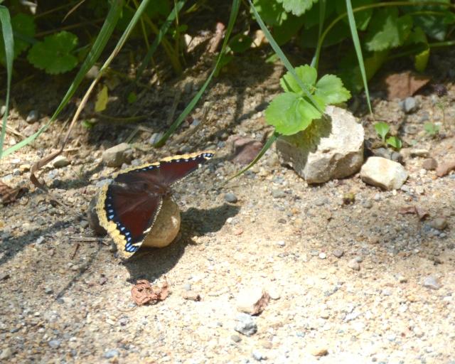 Buterflies, dragons 038.cjpg